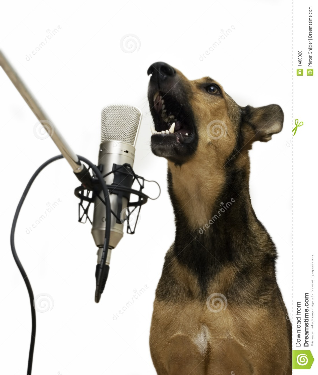 Singing Dog Royalty Free Stock Photos - Image: 1480028