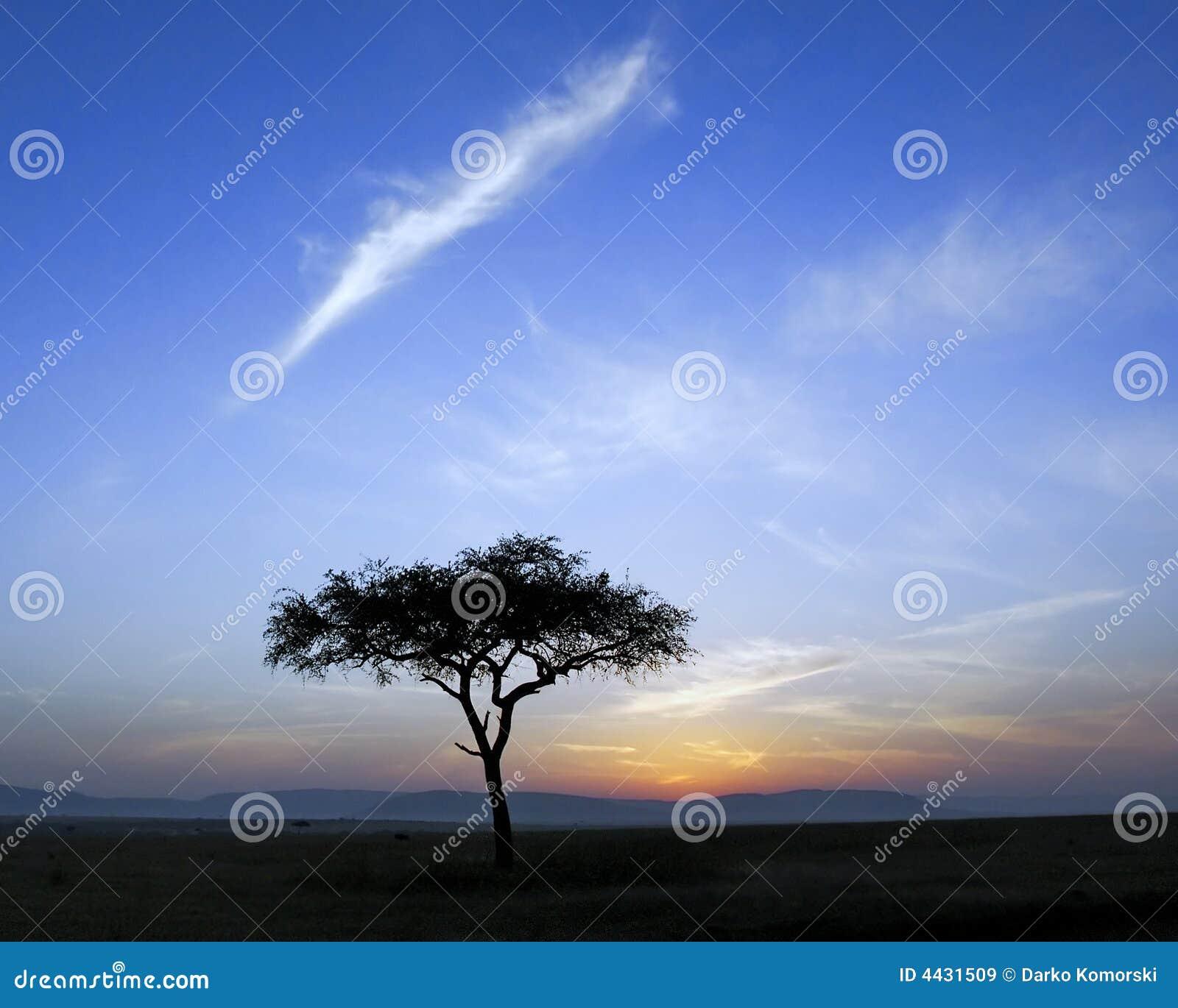 Single acacia tree and sunrise