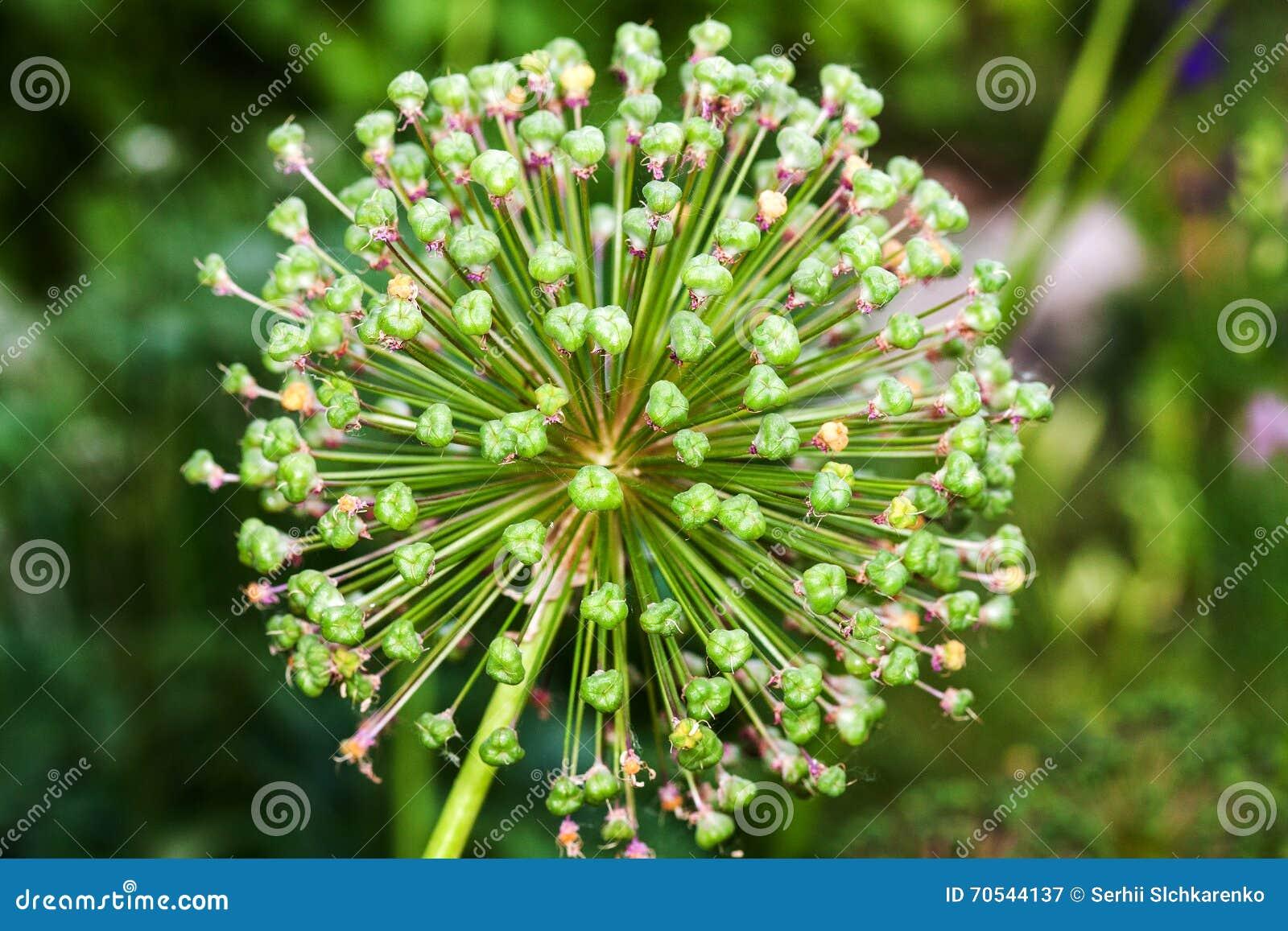 Single Flower Garden : Single white garden flower stock image cartoondealer