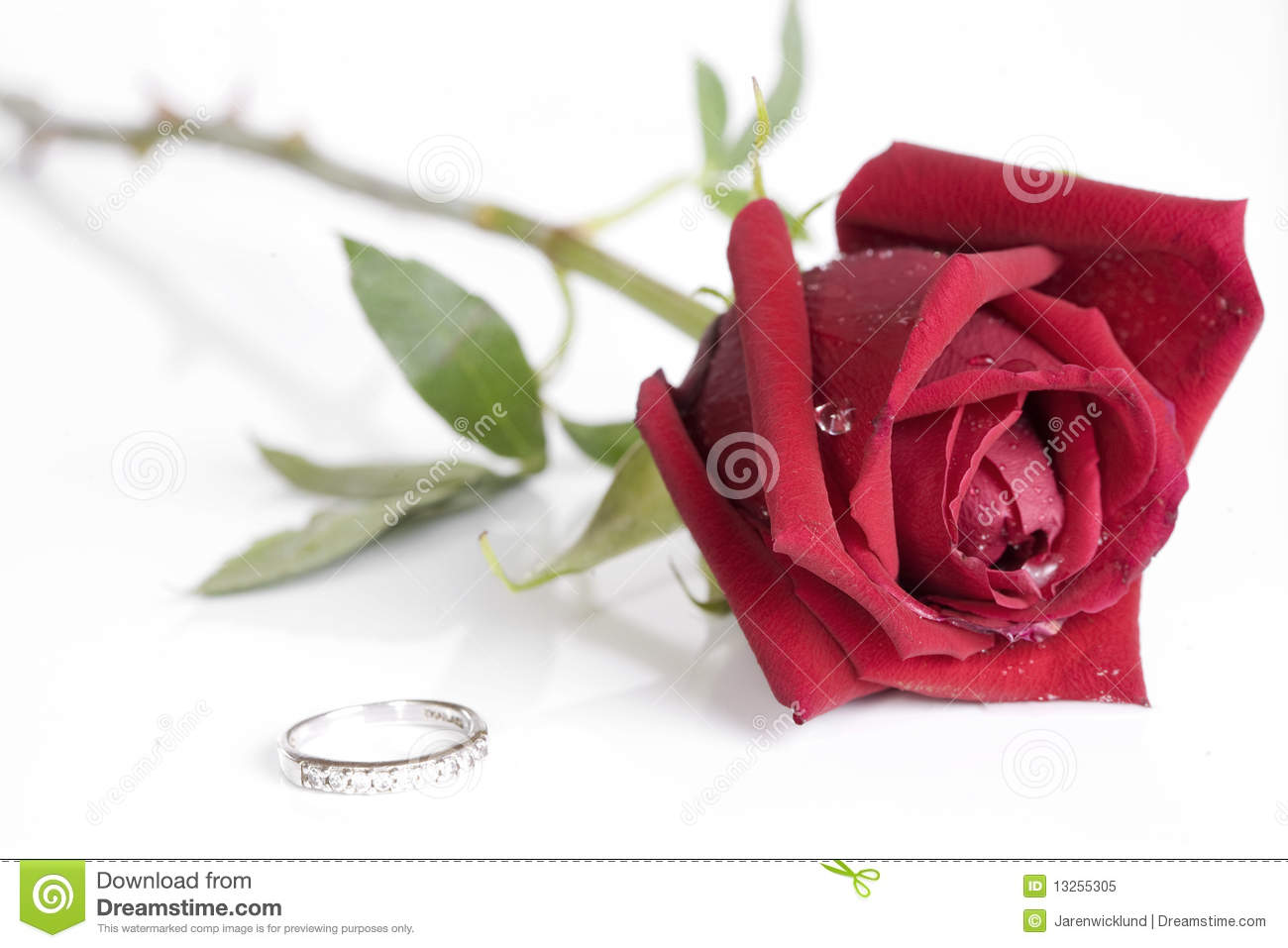 Beautiful Single Red Rose Flower Isolated Royalty Free