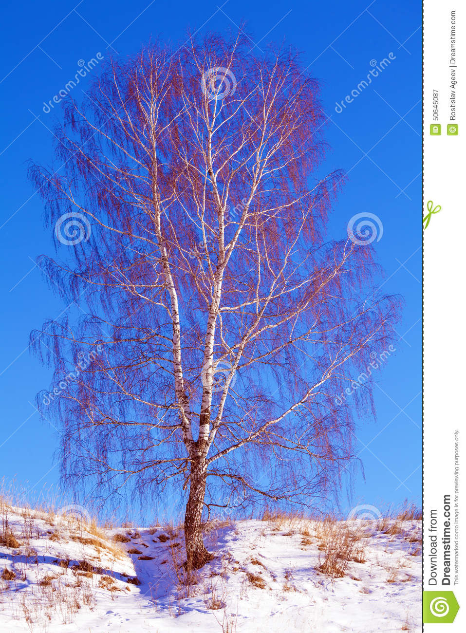birch tree divorced singles personals Coconut water was the birch water that's right folks, those trees in your local park could be the key some of the birch waters available on the.