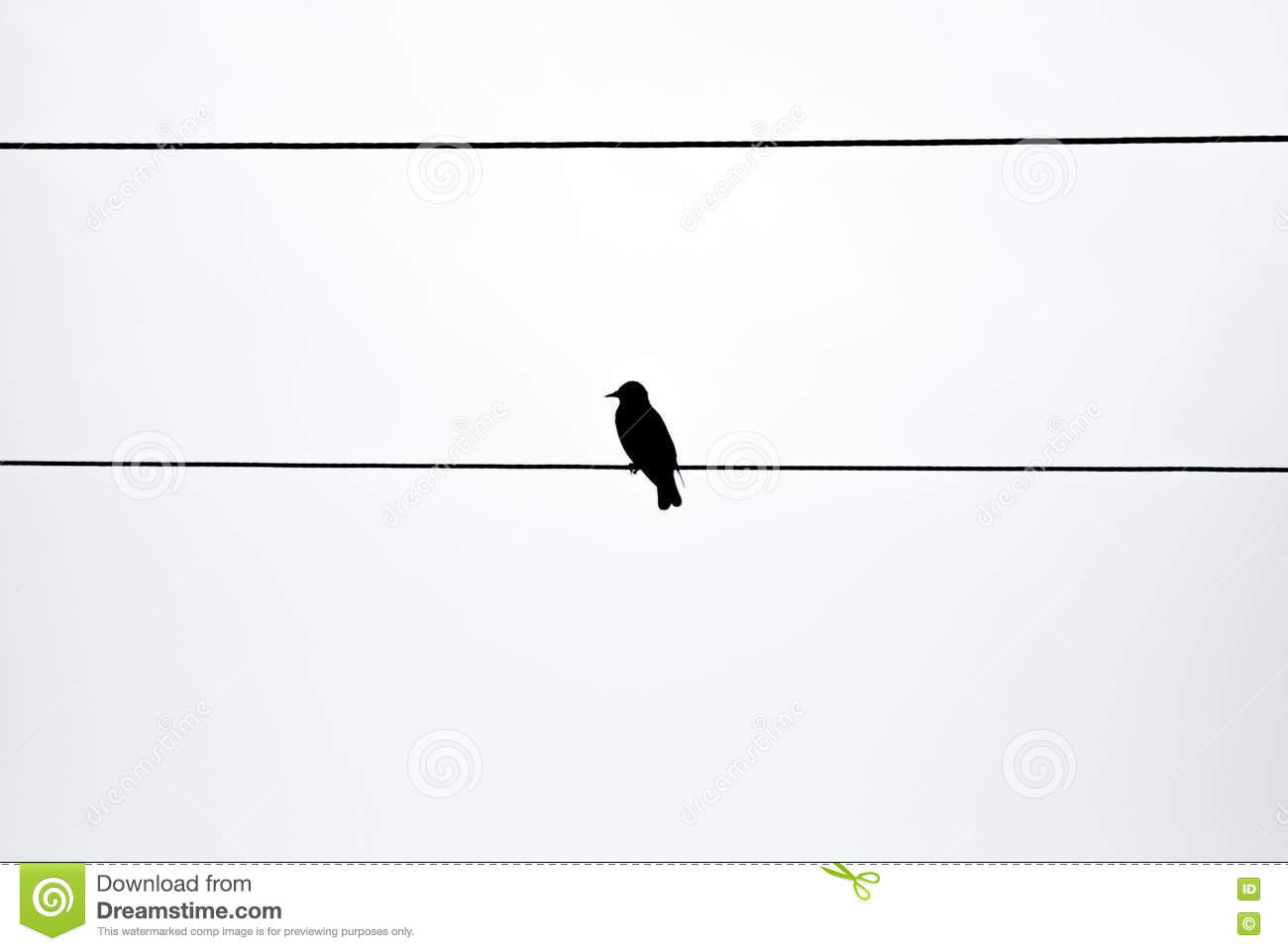 Single bird on a wire stock image. Image of electric - 72193947