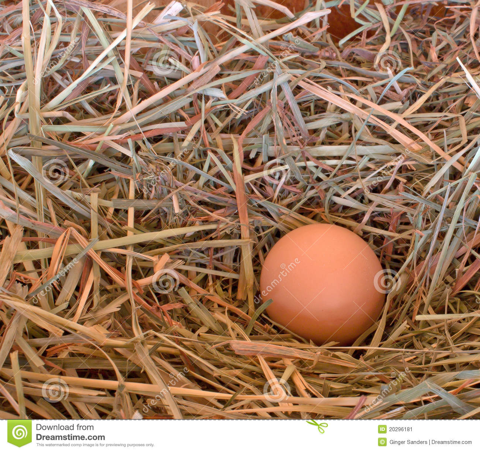 Single Brown Egg in Hay