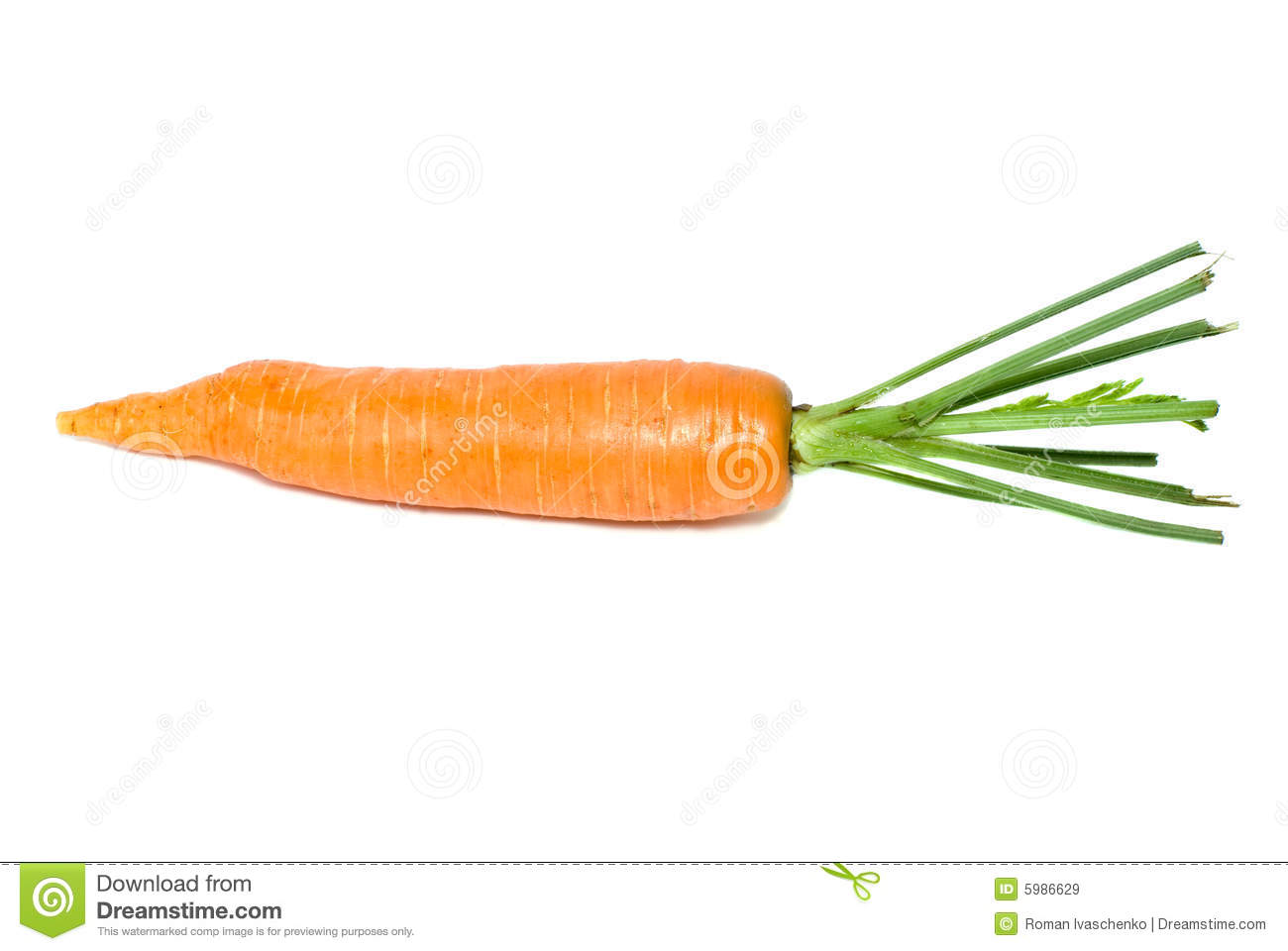 single carrot royalty free stock images image 5986629