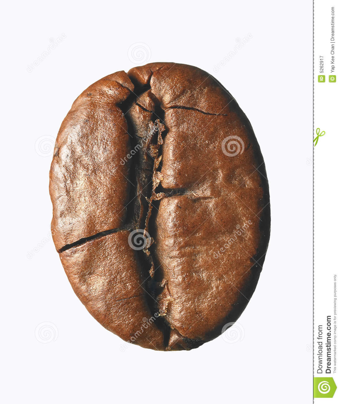 Single Coffee Bean