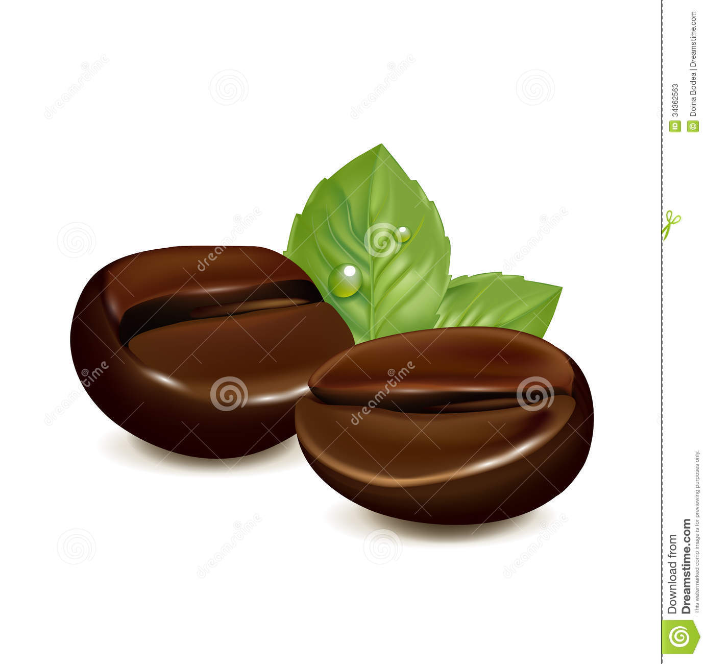 Single Coffee Bean With Leaf Isolated On White Stock ...