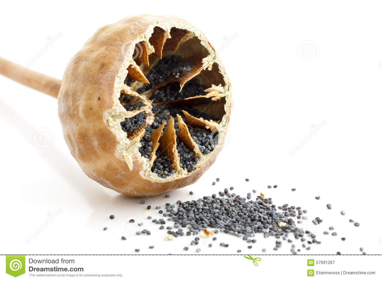 how to cut open a mango seed