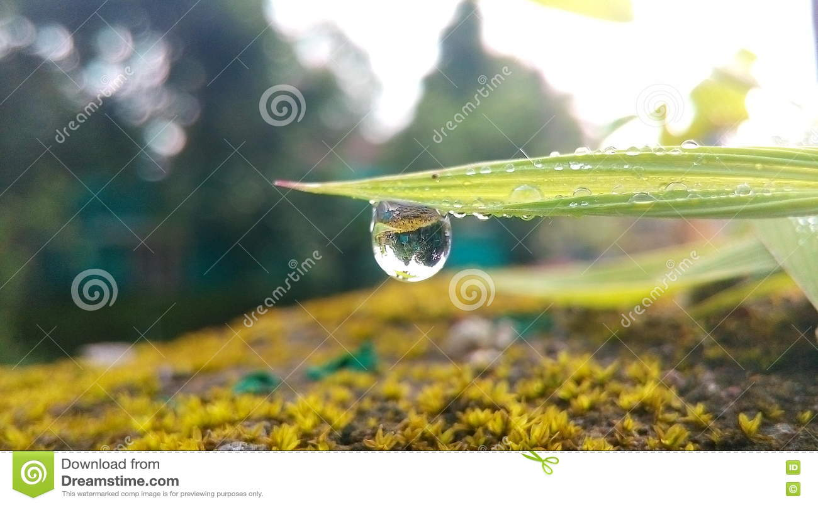 Single rain drop