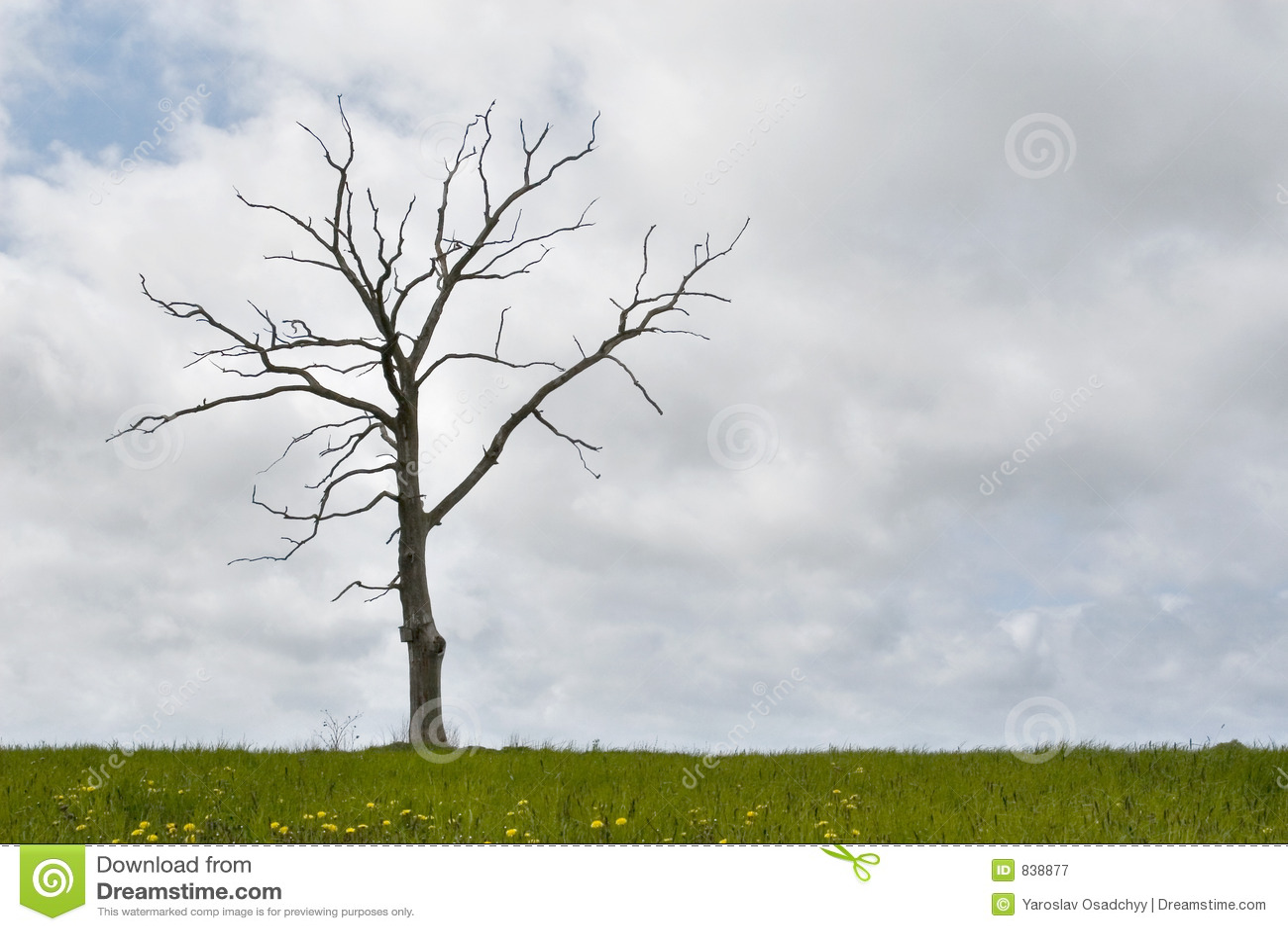 Single dry tree, cloudy sky, grass at bottom