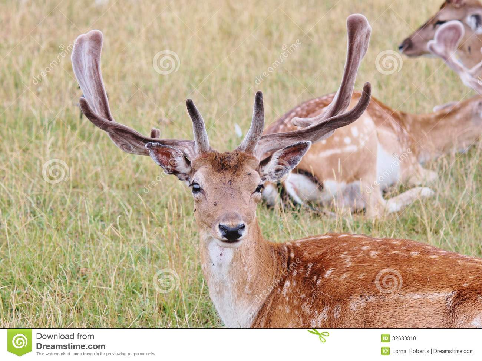 red deer dating singles In the category personals red deer you can find 17 personals ads, eg: friendship, women seeking men or men seeking women.