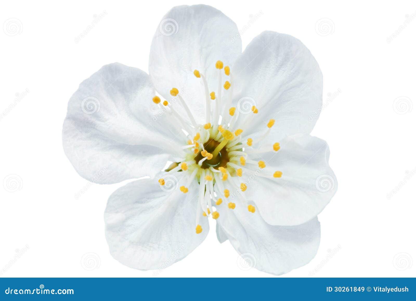 flower vector unfastened sketch