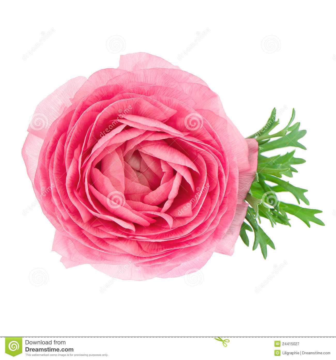 Flower arrangement stock photography Add Text Watermark for Your Photo - Watermark Software
