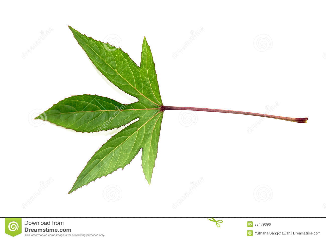 Single Green Leaf Royalty Free Stock Image - Image: 33479396