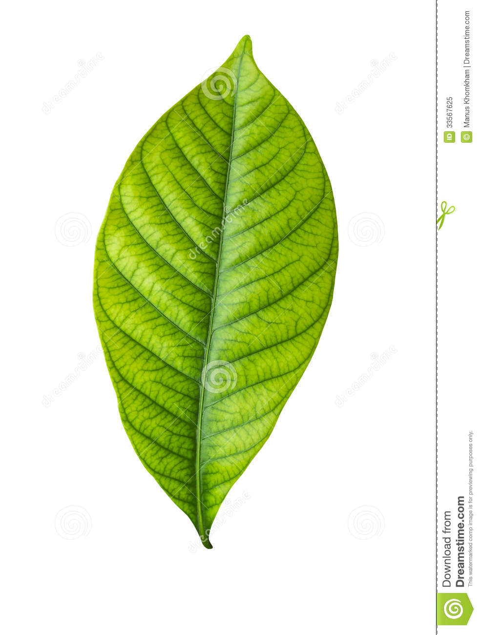 Single Green Leaf On White Royalty Free Stock Photo ...