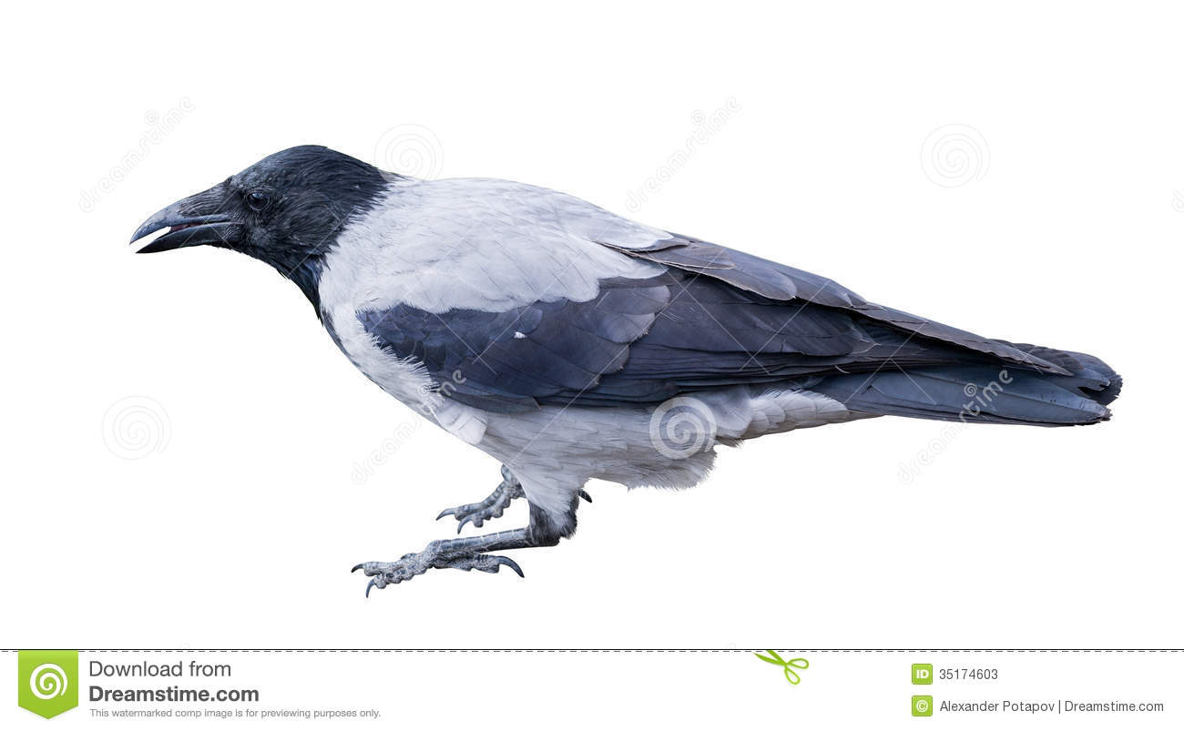 catholic single men in crows landing Frequently asked questions about crows one of the great animal phenomena of the world is the congregation of large numbers of birds into a single.