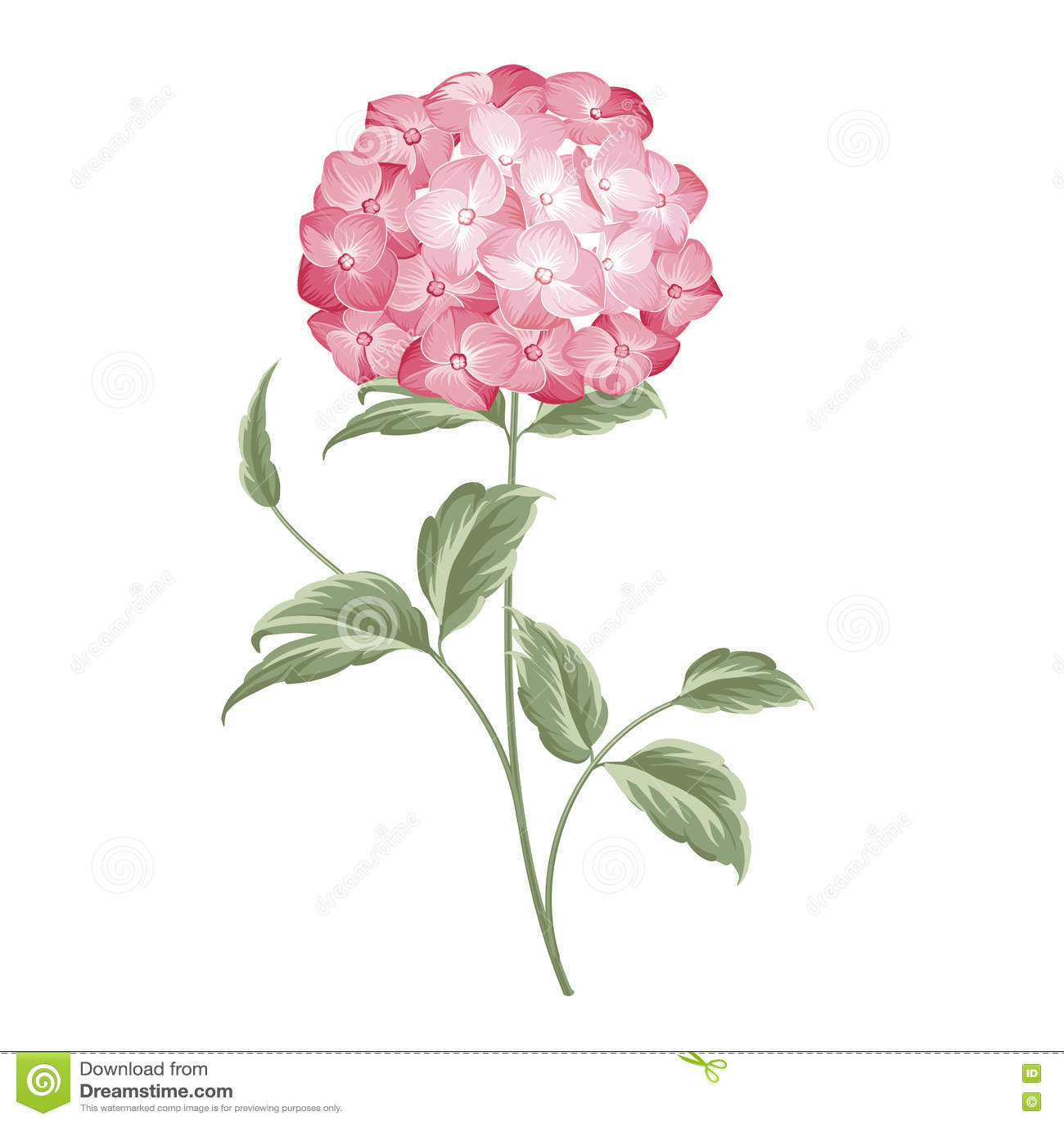 Single Hortensia Flower Stock Vector Illustration Of Abstract