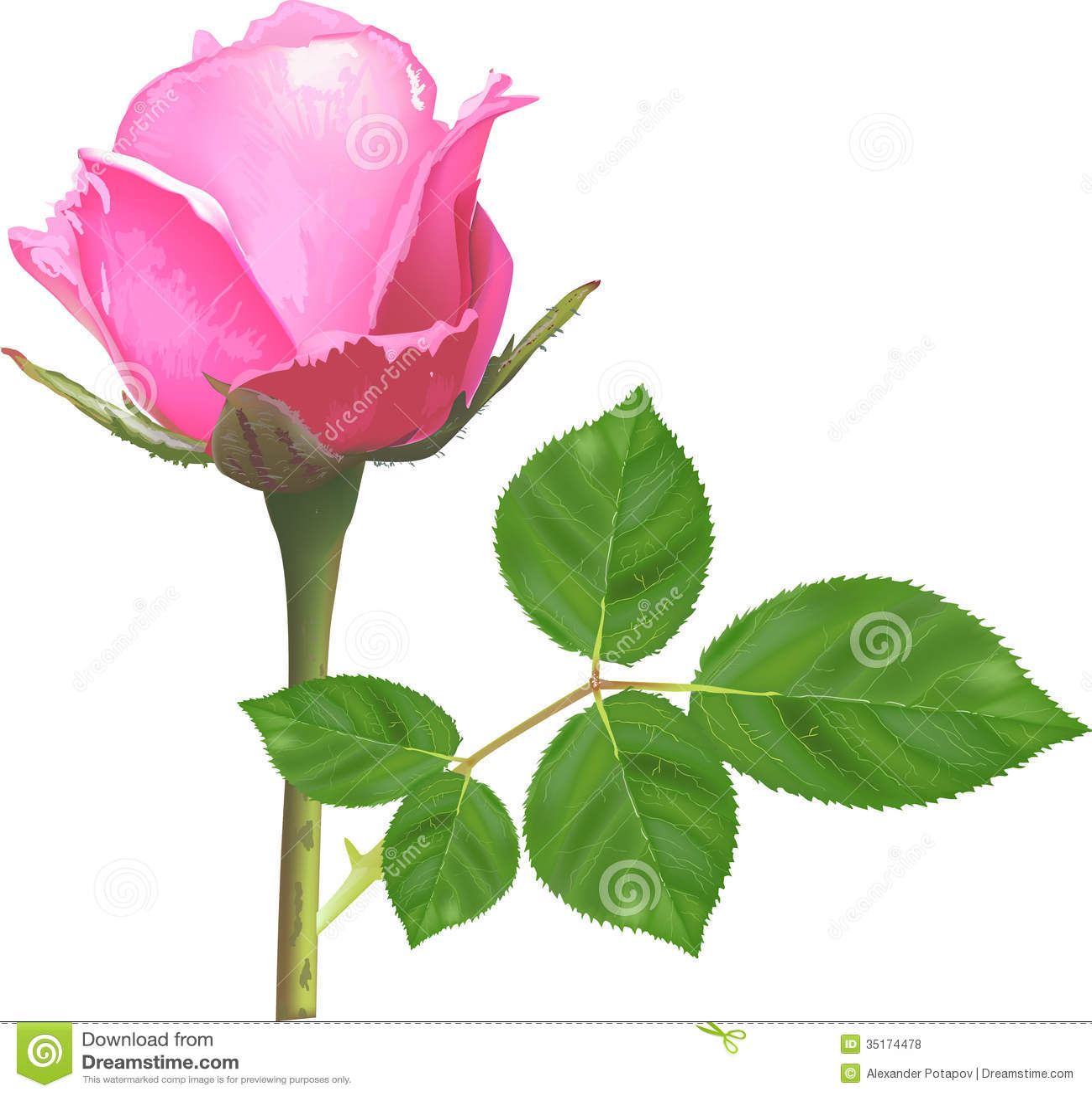 single pink flower rose - photo #27