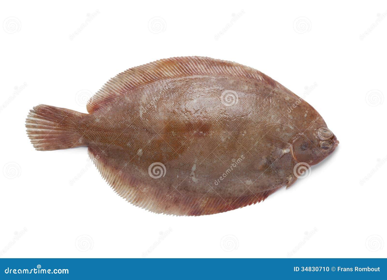 Freshwater Sole : Single Lemon Sole Fish Stock Photo - Image: 34830710