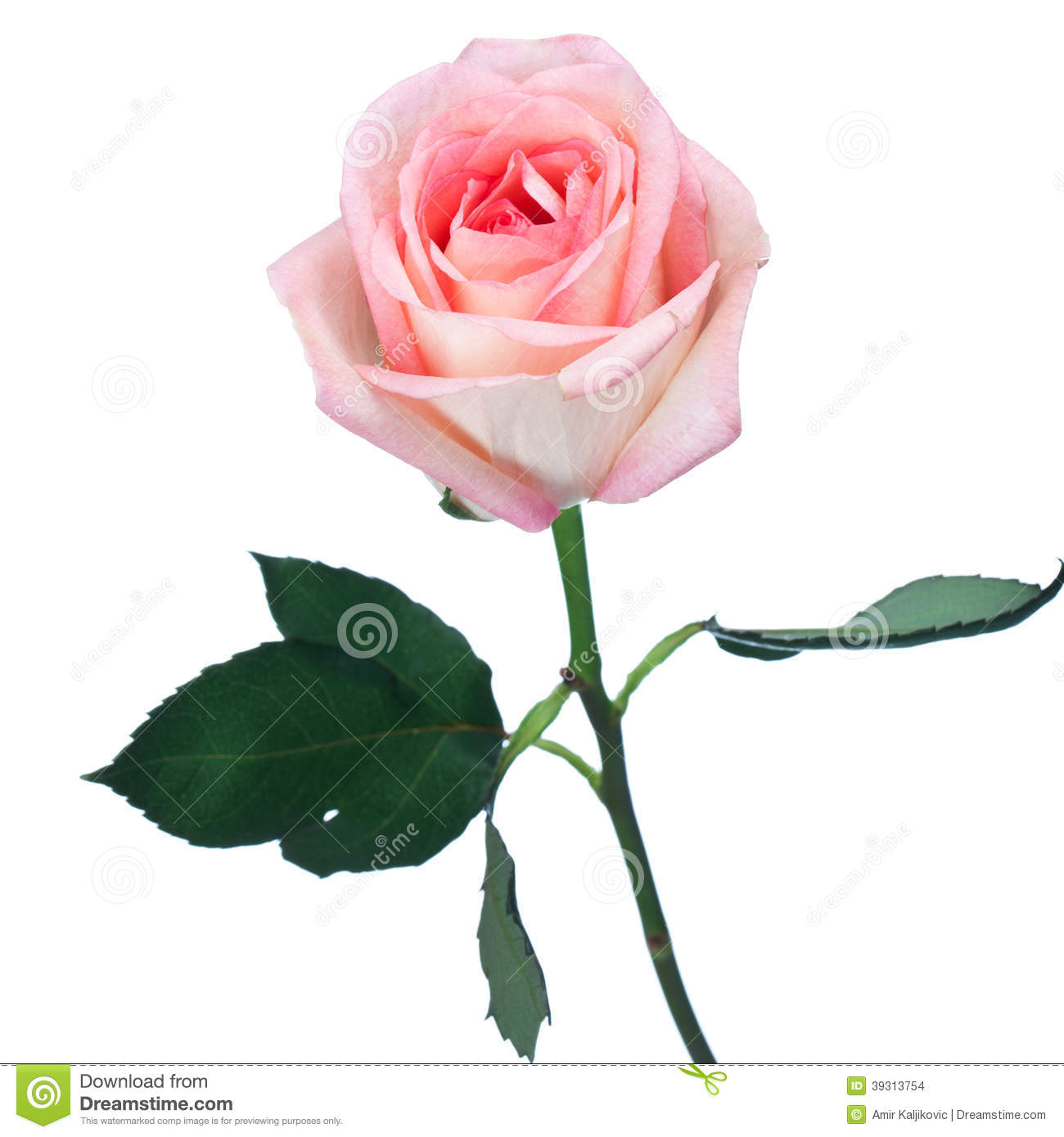 analysis of one perfect rose With over 9000 resources, including lesson plans, worksheets, audio, video and flashcards, onestopenglish is the world's number one resource site for english.