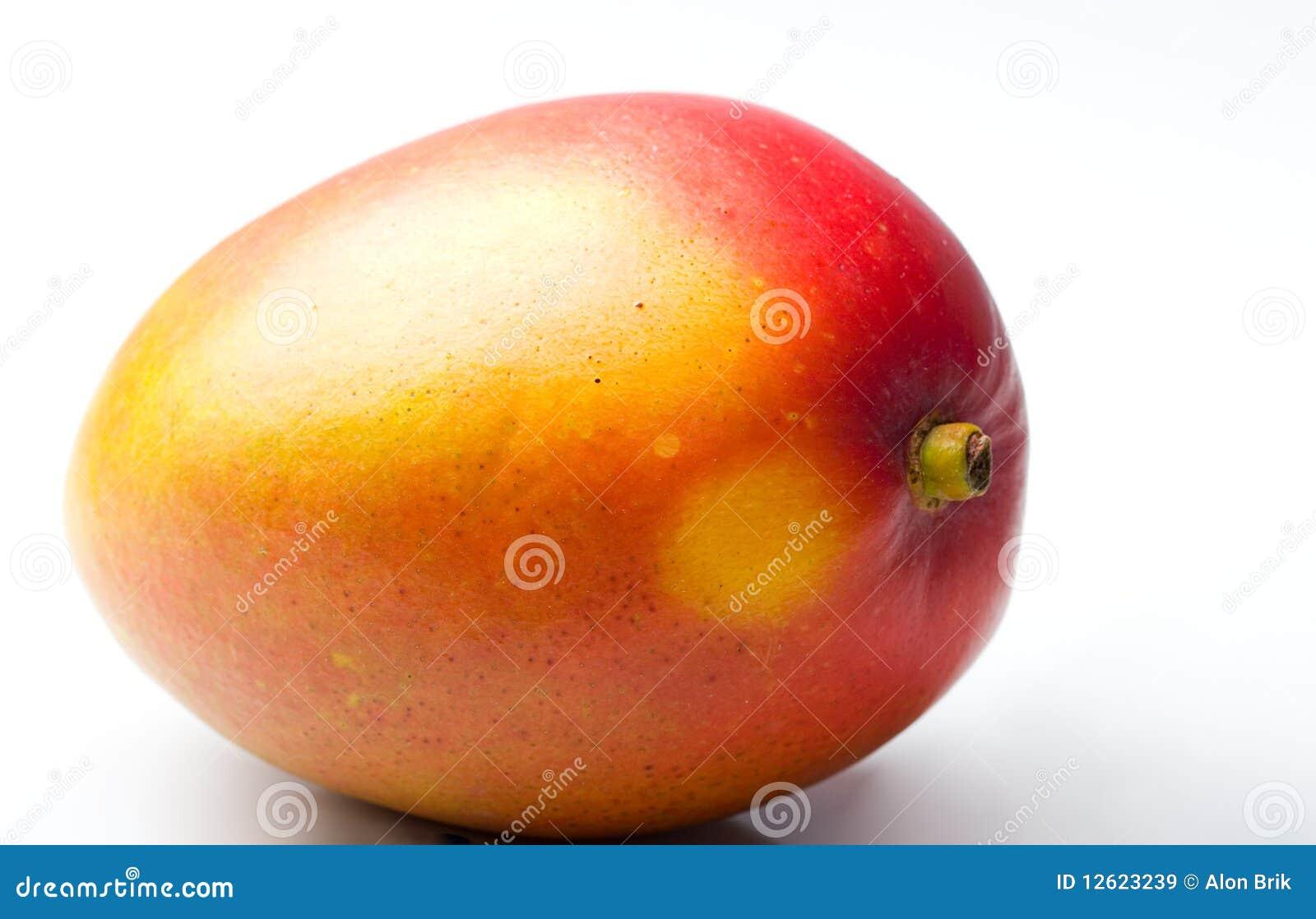 single mango fresh juicy ripe tropical fruit stock image