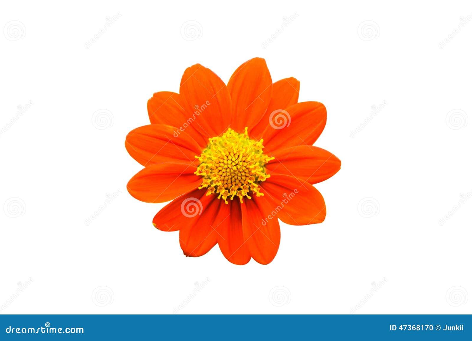 The Single Orange Flower Isolated On White Background Stock Photo