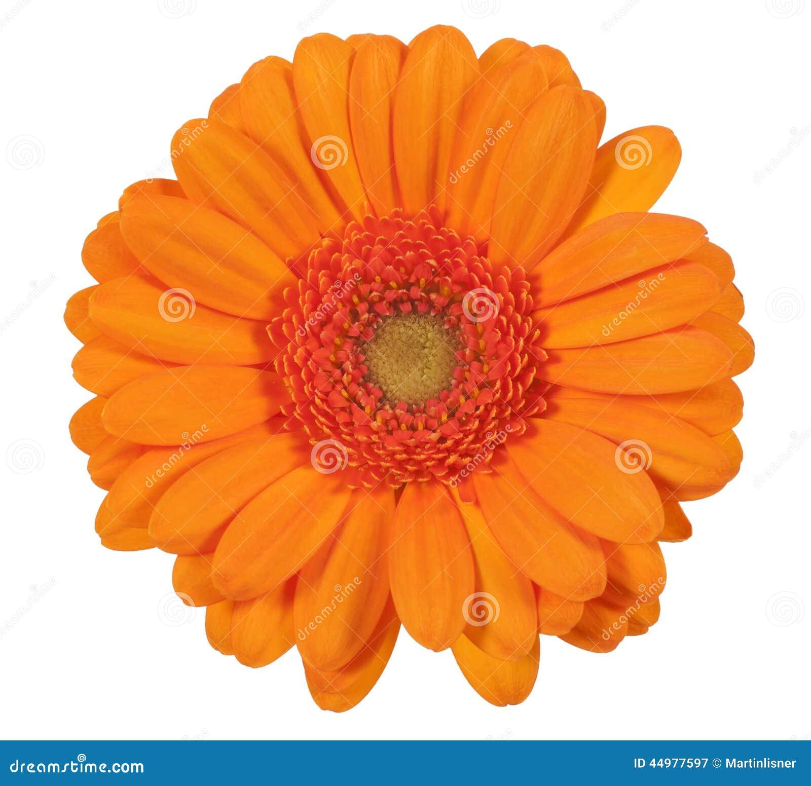 Dating orange