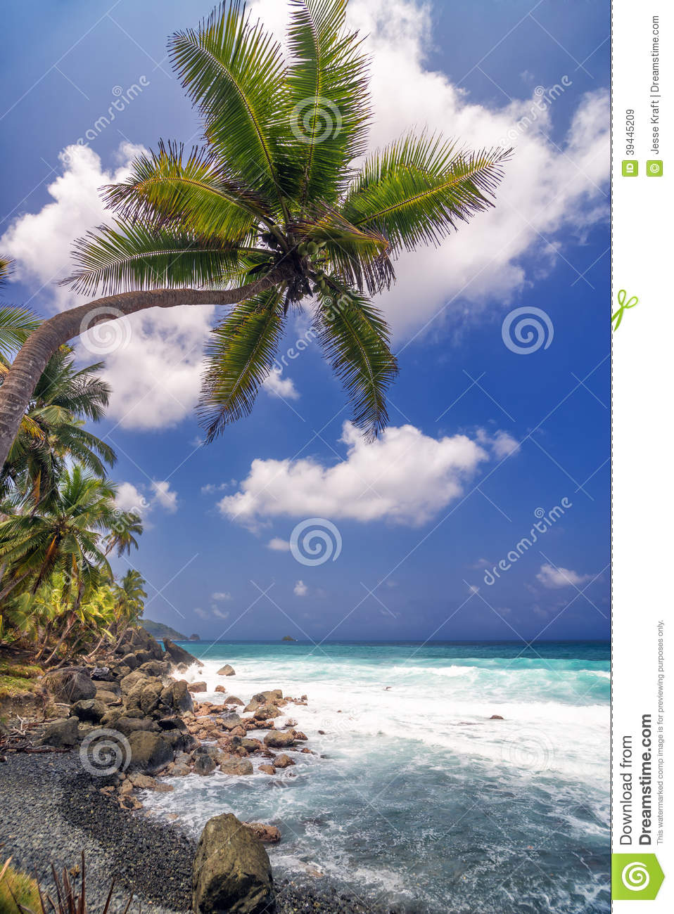 Single palm tree pictures - stress free holiday entertaining images