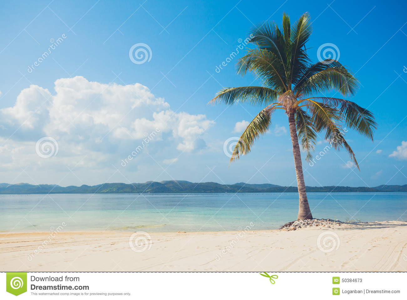Single palm tree on tropical beach stock image image of nature single palm tree on tropical beach voltagebd Image collections