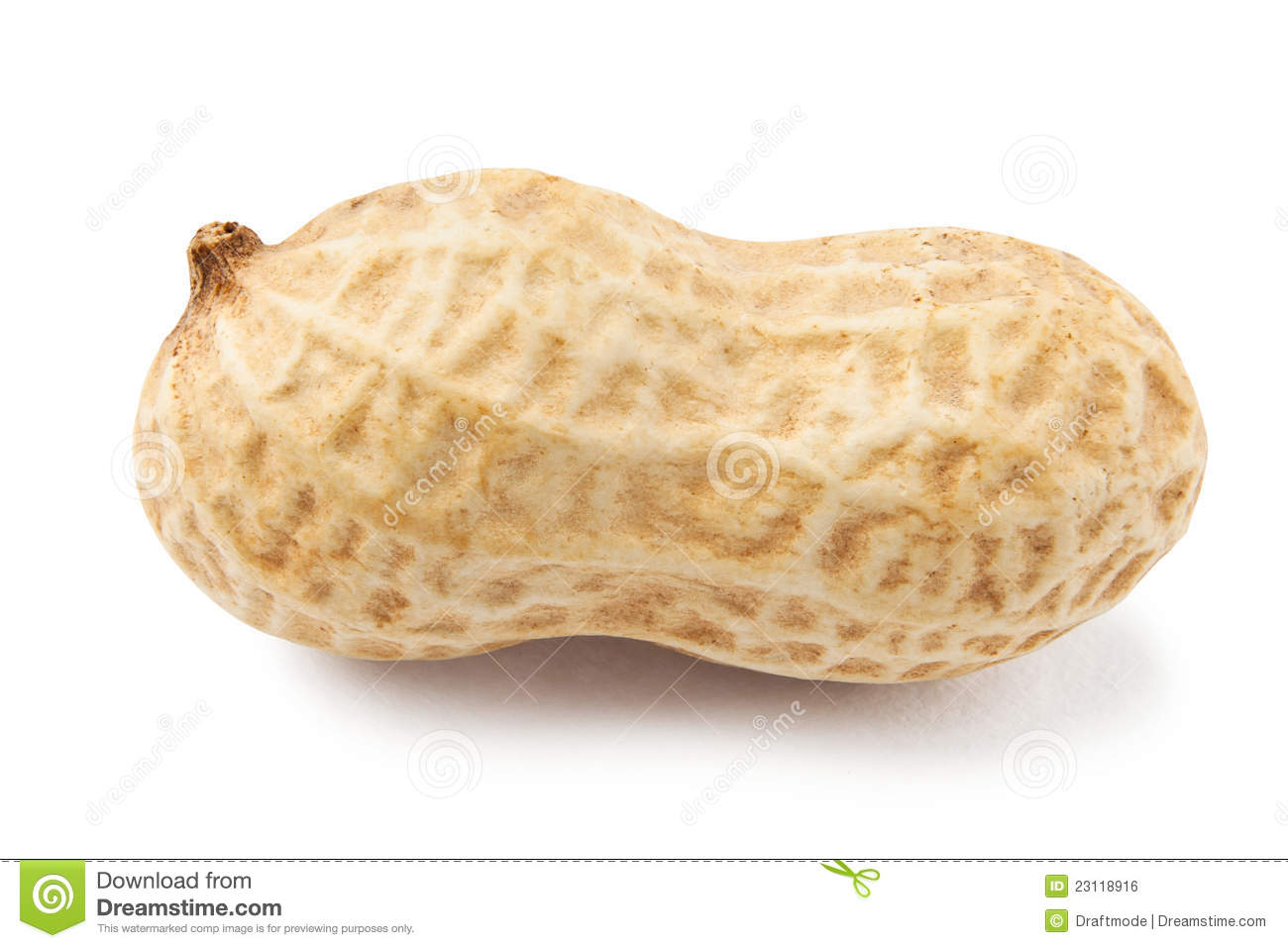 Single Peanut Royalty Free Stock Image Image 23118916