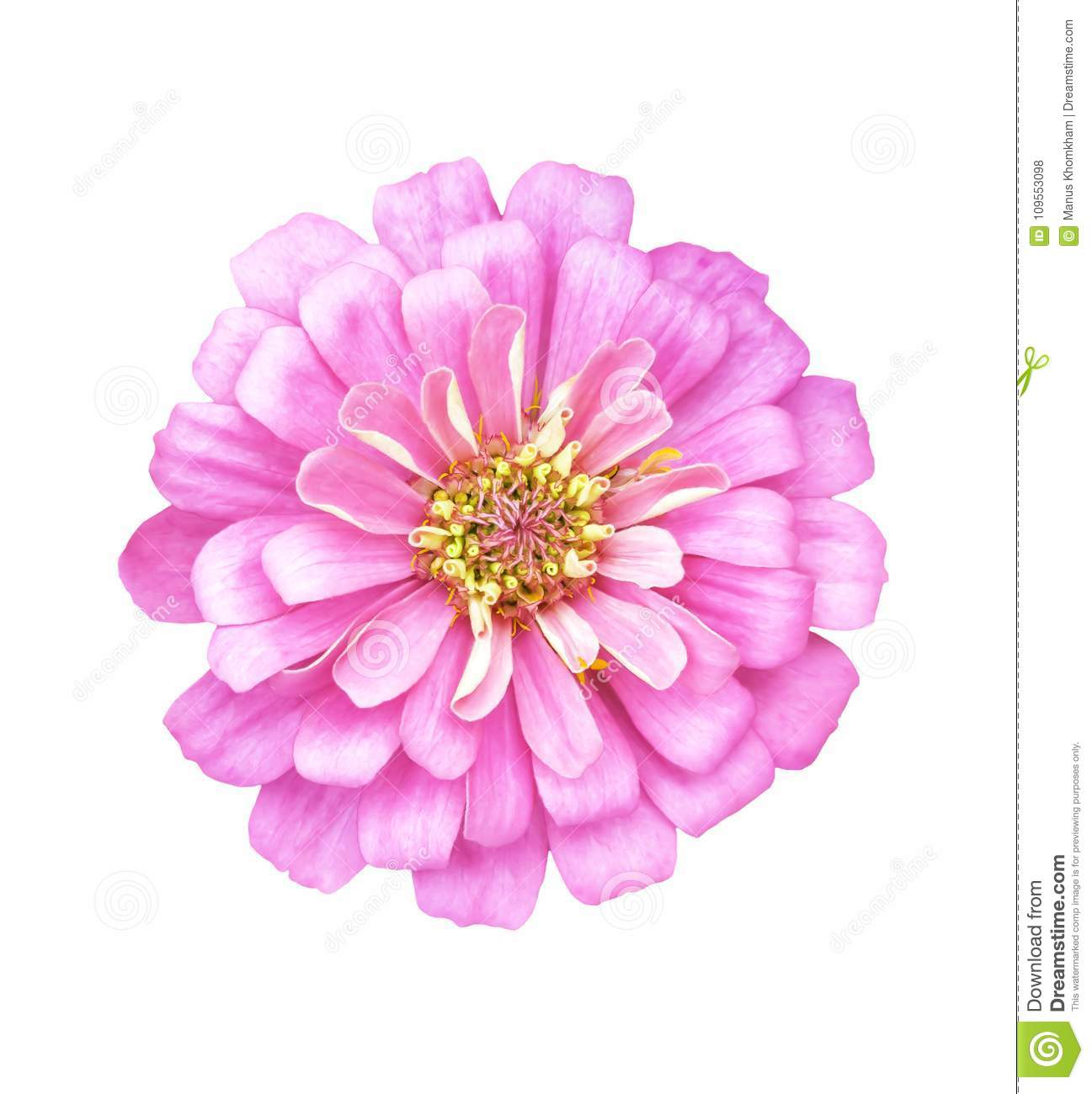 Single pink flower isolated on white background stock photo image download single pink flower isolated on white background stock photo image of florist beautiful mightylinksfo