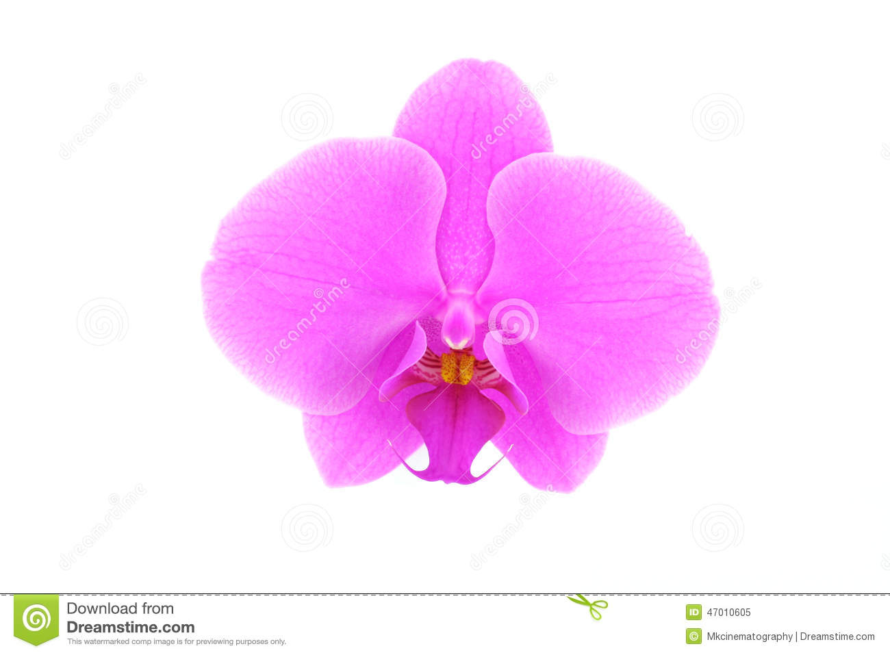 Single Pink Orchid Flower Stock Image Image Of Orchid 47010605