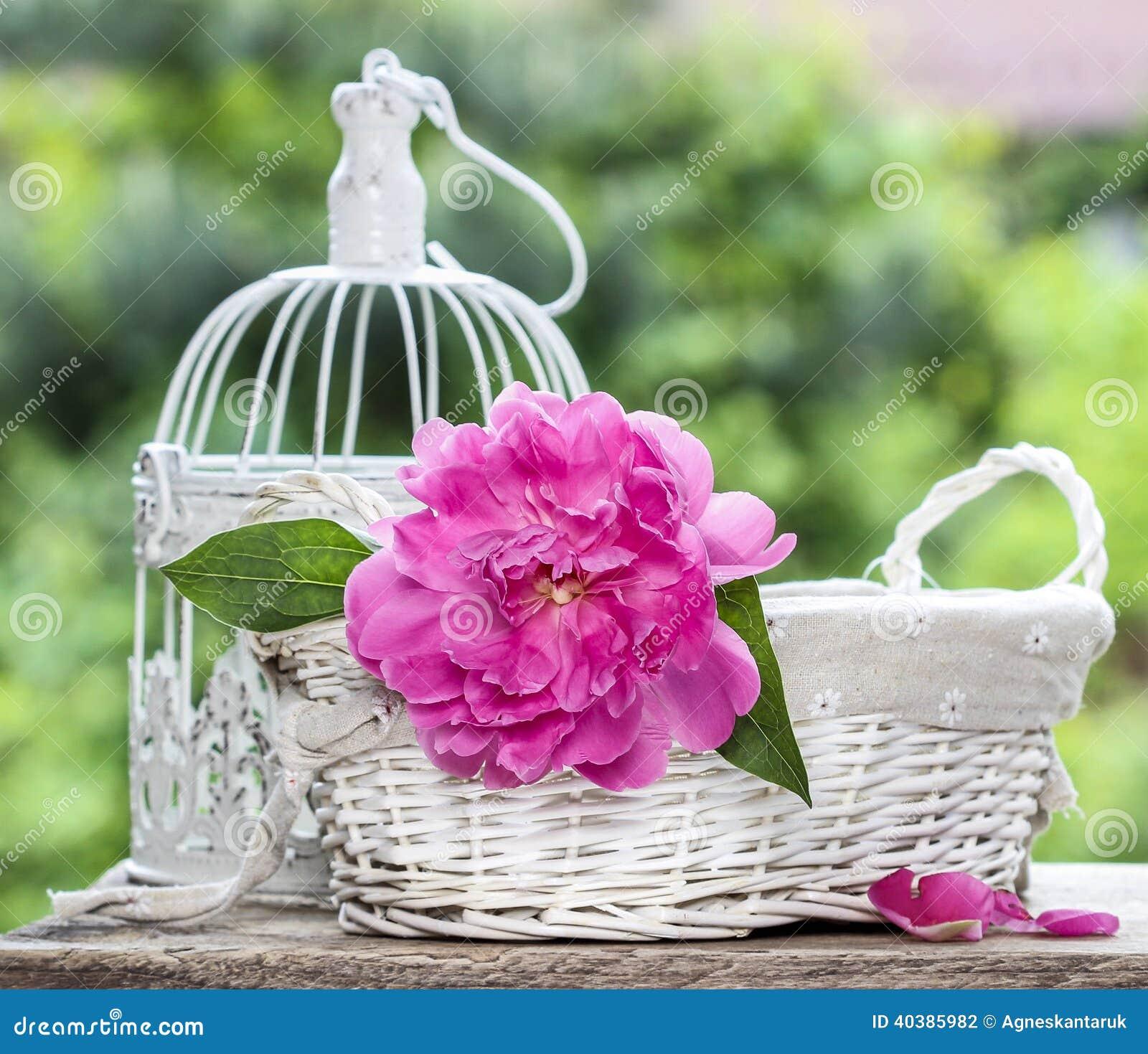 Panier De Fleurs Fraîches : Single pink peony flower in white wicker basket stock