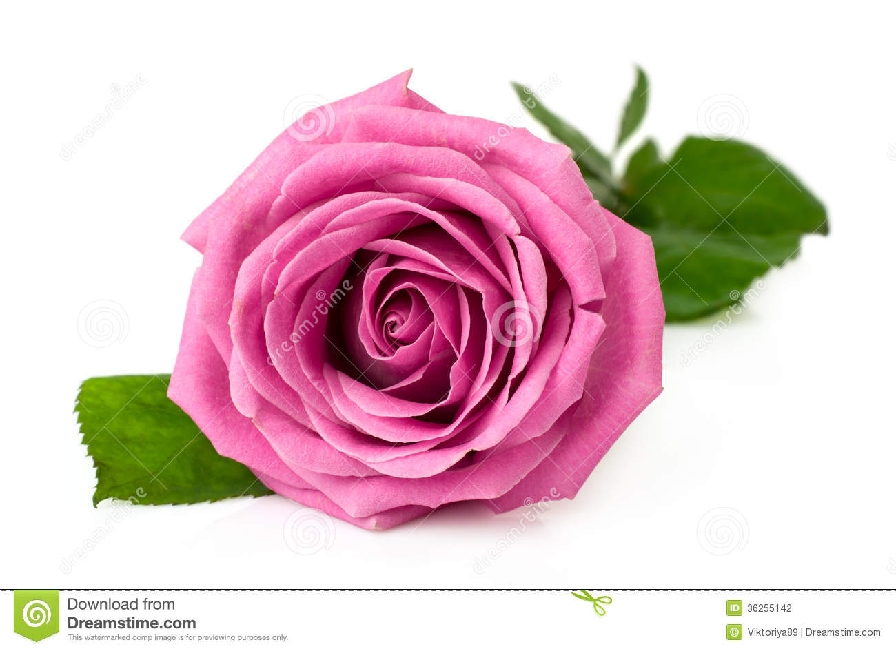 Beautiful Single Red Rose Flower Isolated Royalty Free: Single Pink Rose Stock Photo. Image Of Leaf, Beauty