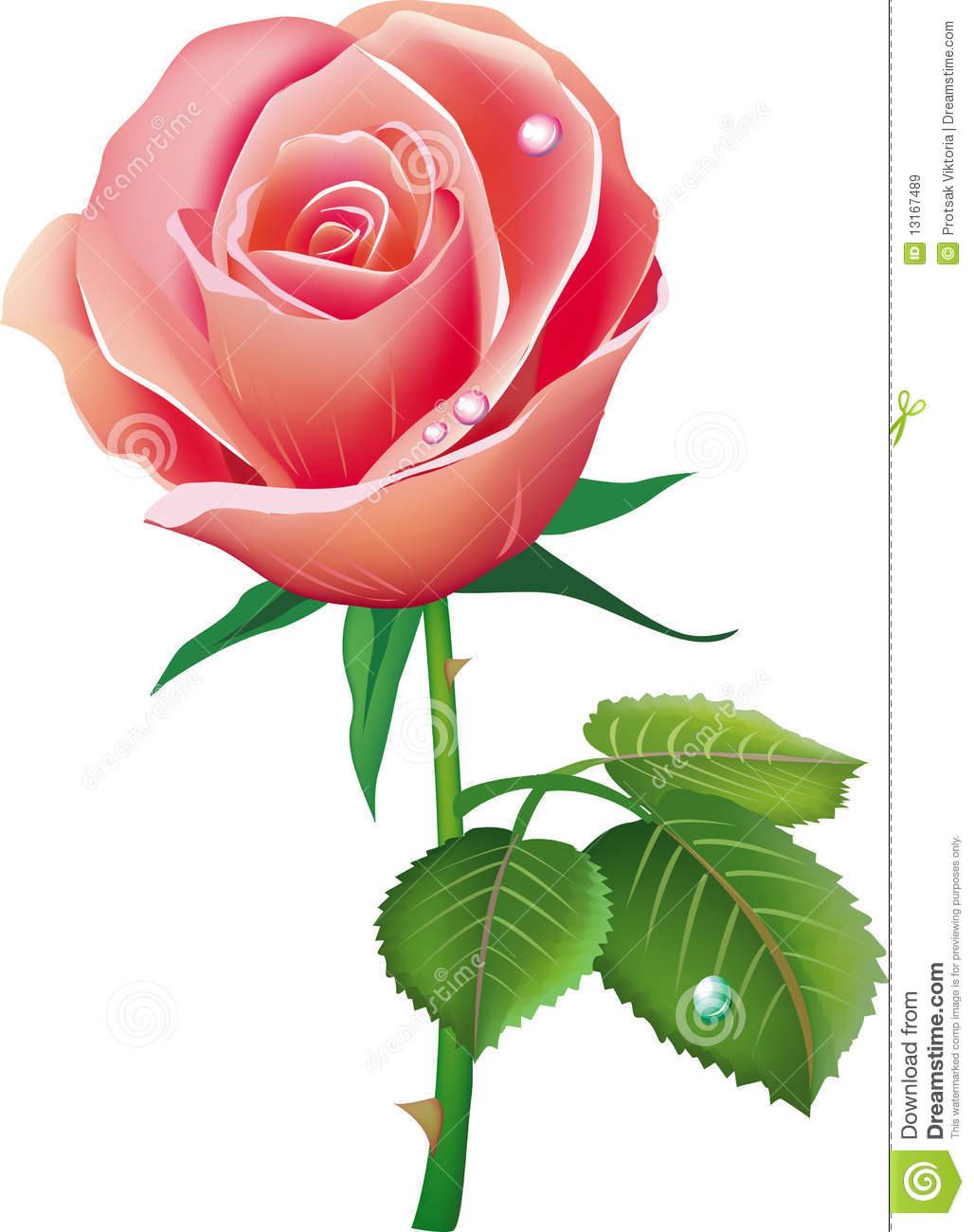 Single pink rose with petals royalty free stock images for Individual rose petals