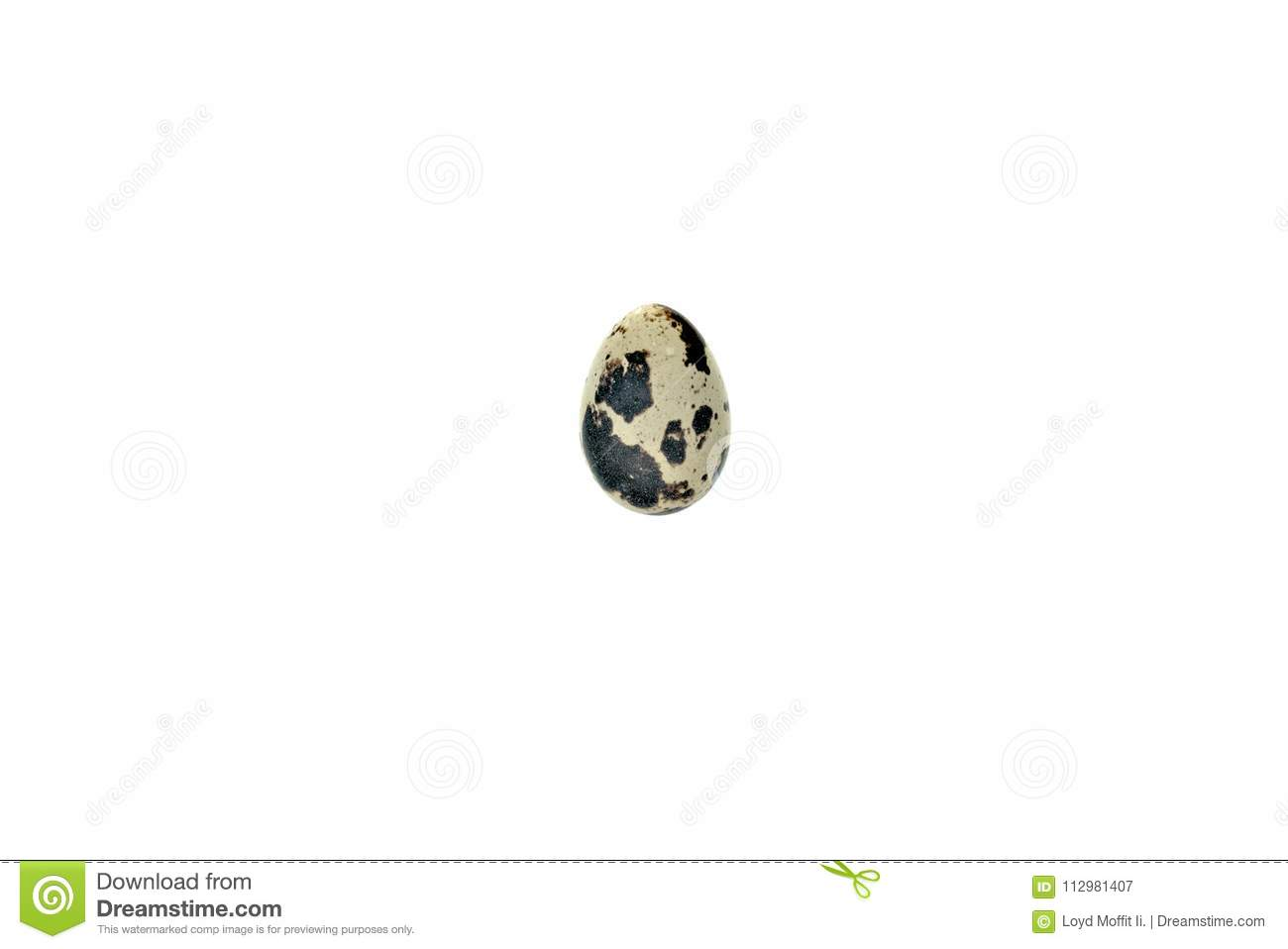 A single quail egg on an all white background.
