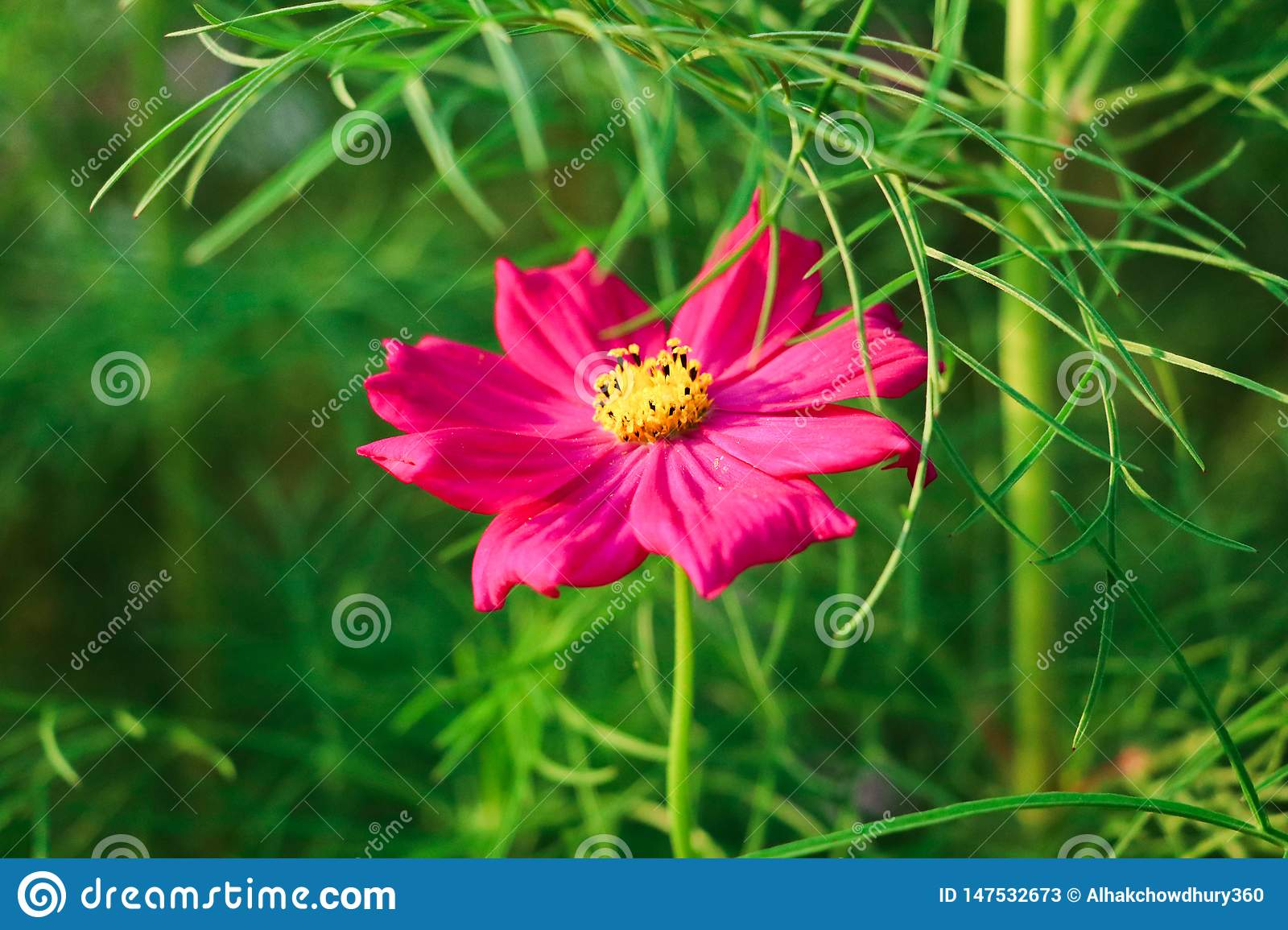 Single red flower on green background green leafs