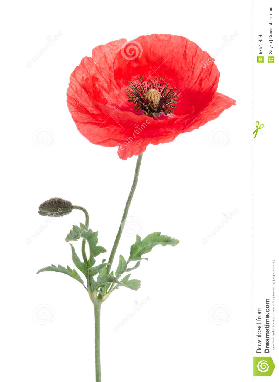 single red poppy stock photo image 58572424 farming clip art images farming clip art animated