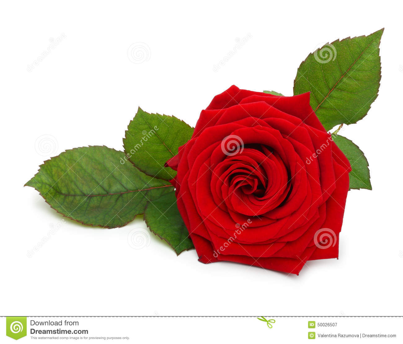 royalty singles Find single rose flower stock images in hd and millions of other royalty-free stock photos, illustrations, and vectors in the shutterstock collection thousands of new, high-quality pictures.