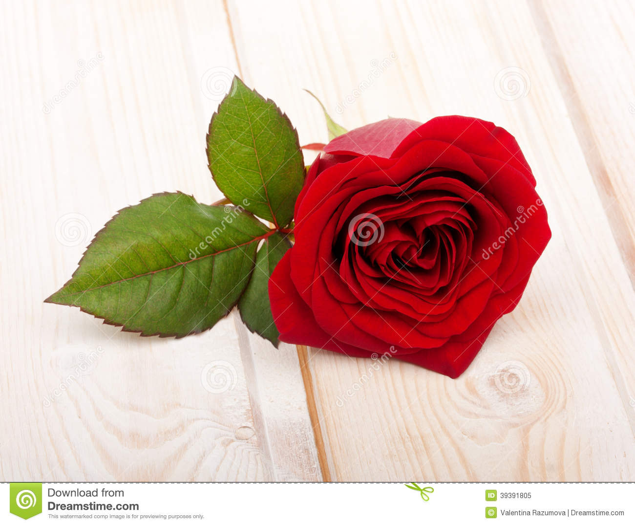 Single Red Rose Flower Stock Images: Single Red Rose Flower Stock Photo
