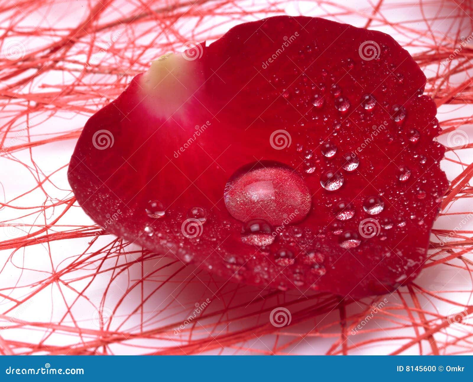 petal dating Petal online dating for petal singles 1,500,000 daily active members.