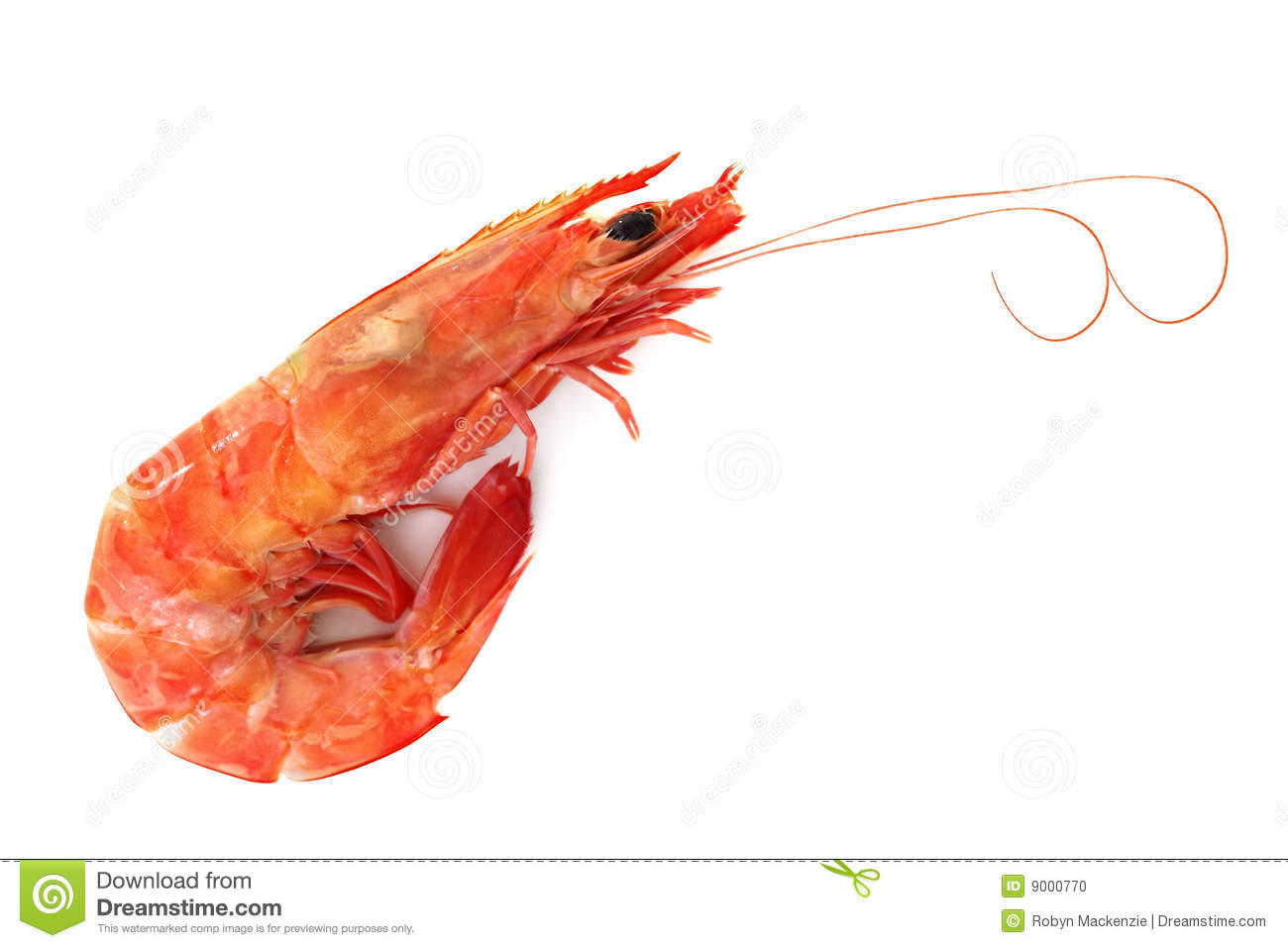 Single Shrimp