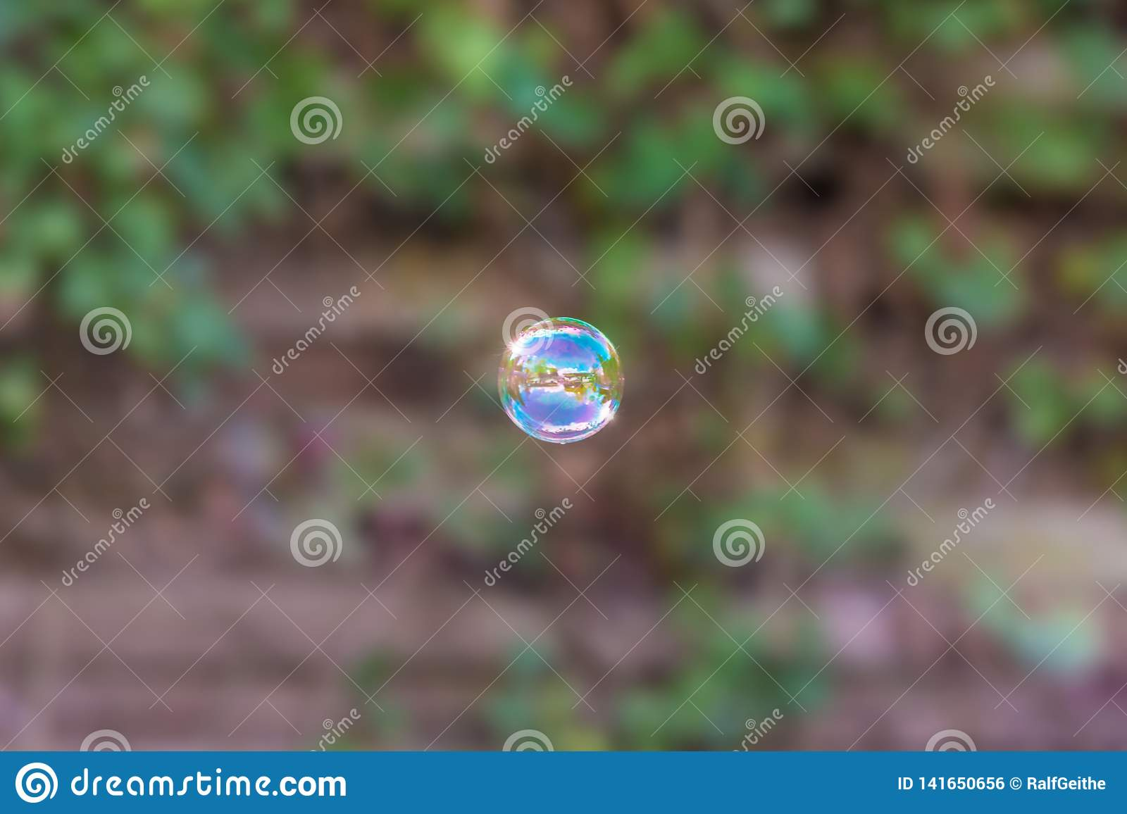 Single soap bubble in front of overgrown garden fence