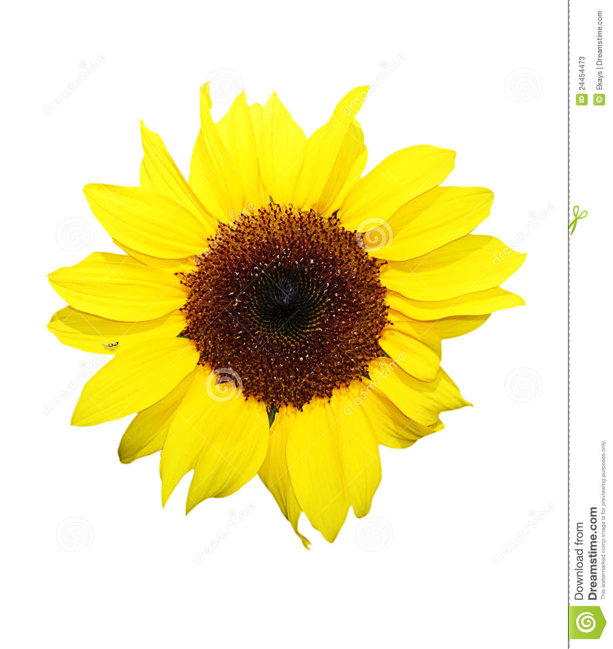 sunflower singles Title: manhattan magazine, spring 2017, author: sunflower publishing, name: manhattan magazine, spring 2017, length: 64 pages, page: 1.
