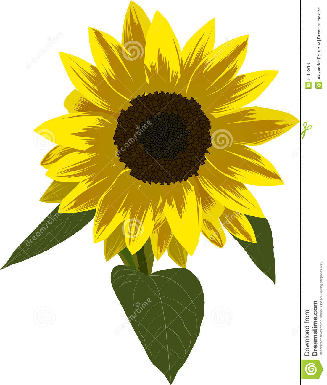 Single Sunflower Illustration Royalty Free Stock Image ...