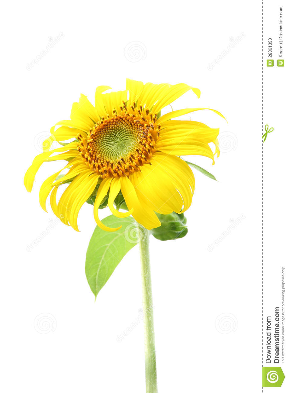 sunflower divorced singles dating site Divorced women dating - best place for new romances welcome to divorced women dating club, the best club for singles.
