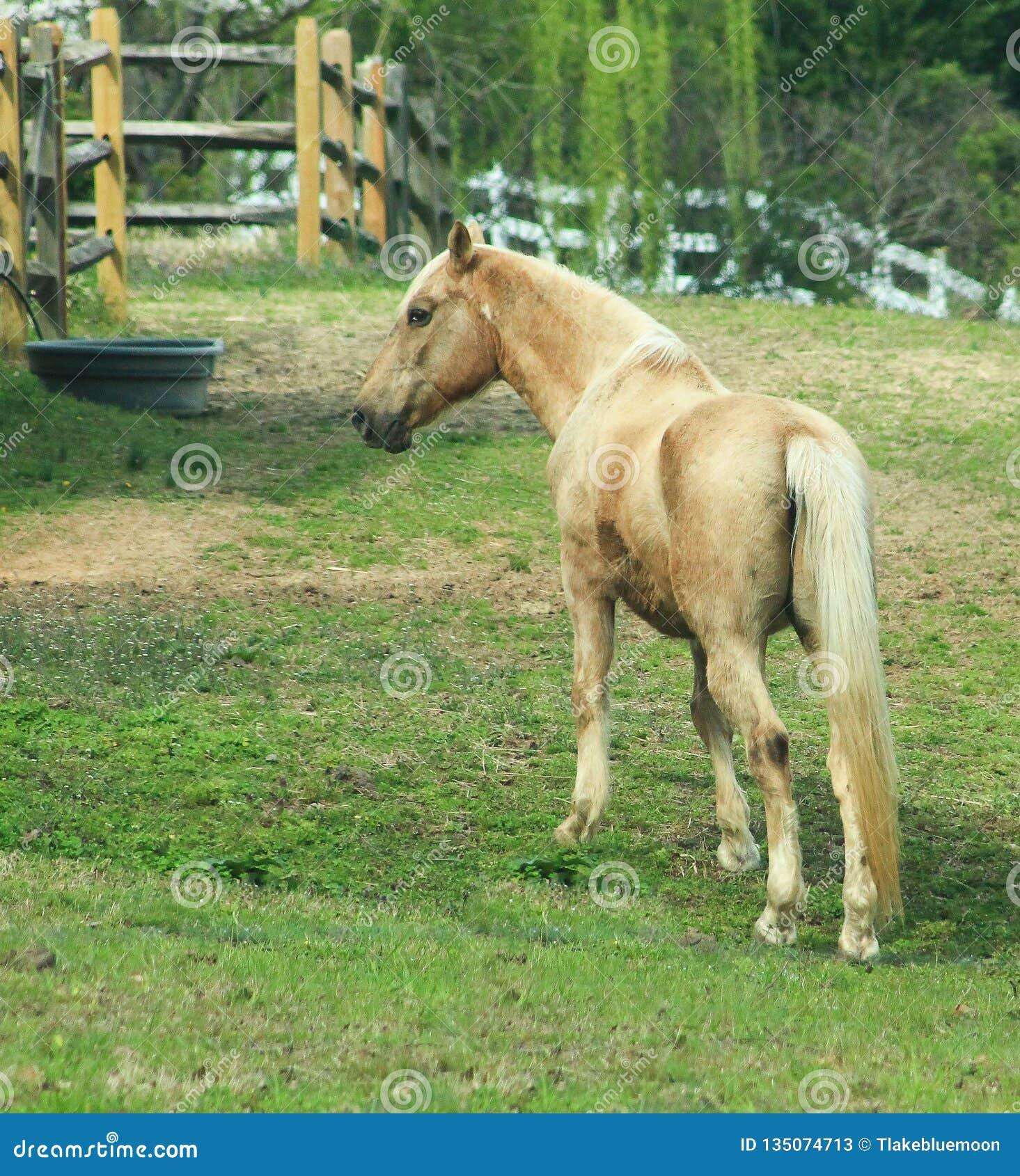 Tan horse in field