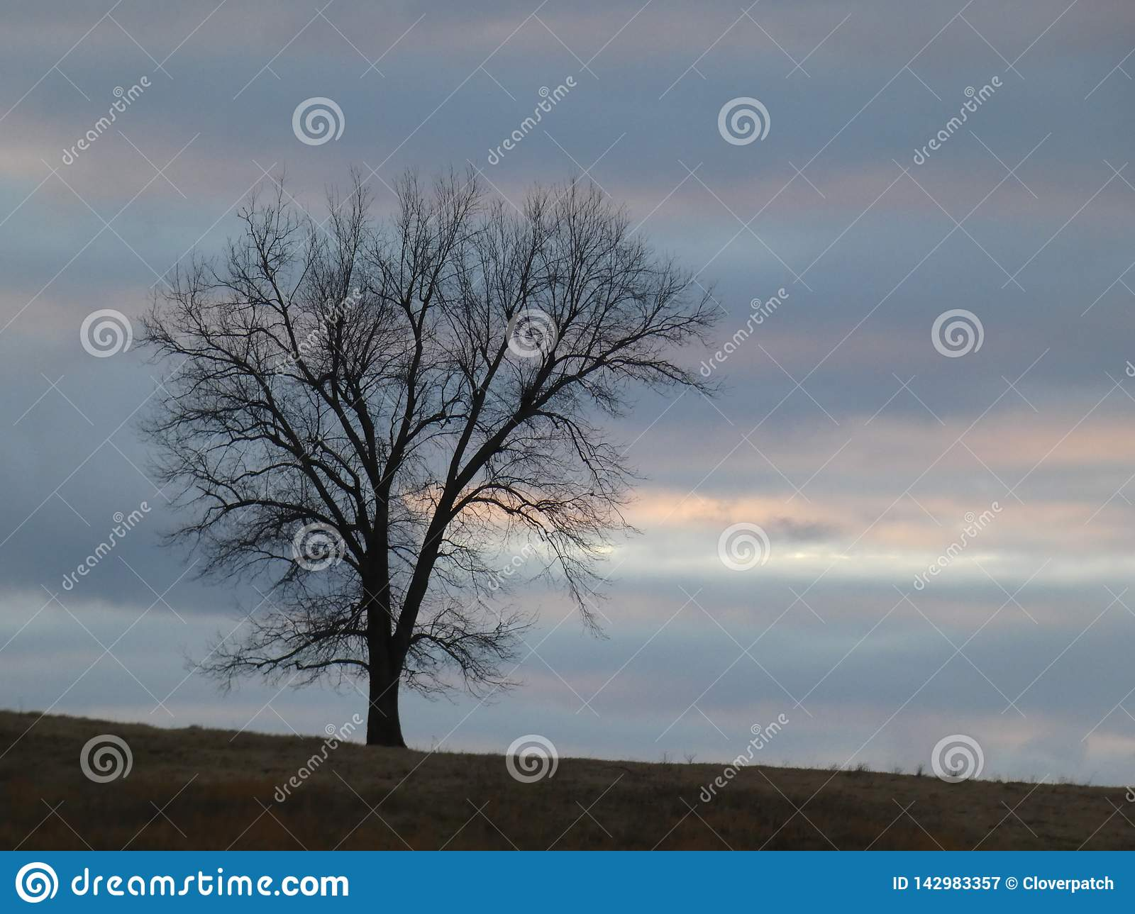Single Tree with Bare Branches Silhouette on Hilltop Against Cloudy Watercolor Dreamy Sky