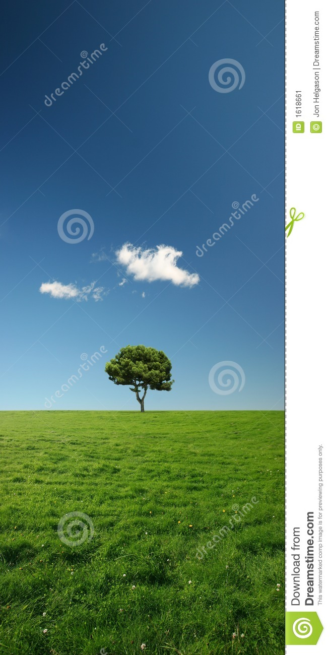 Single tree on a beautiful and vast green meadow