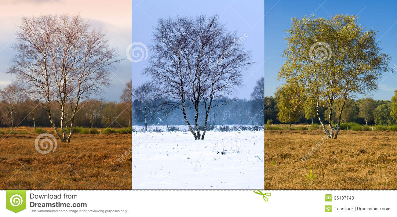 Single Tree In Different Seasons Stock Photo