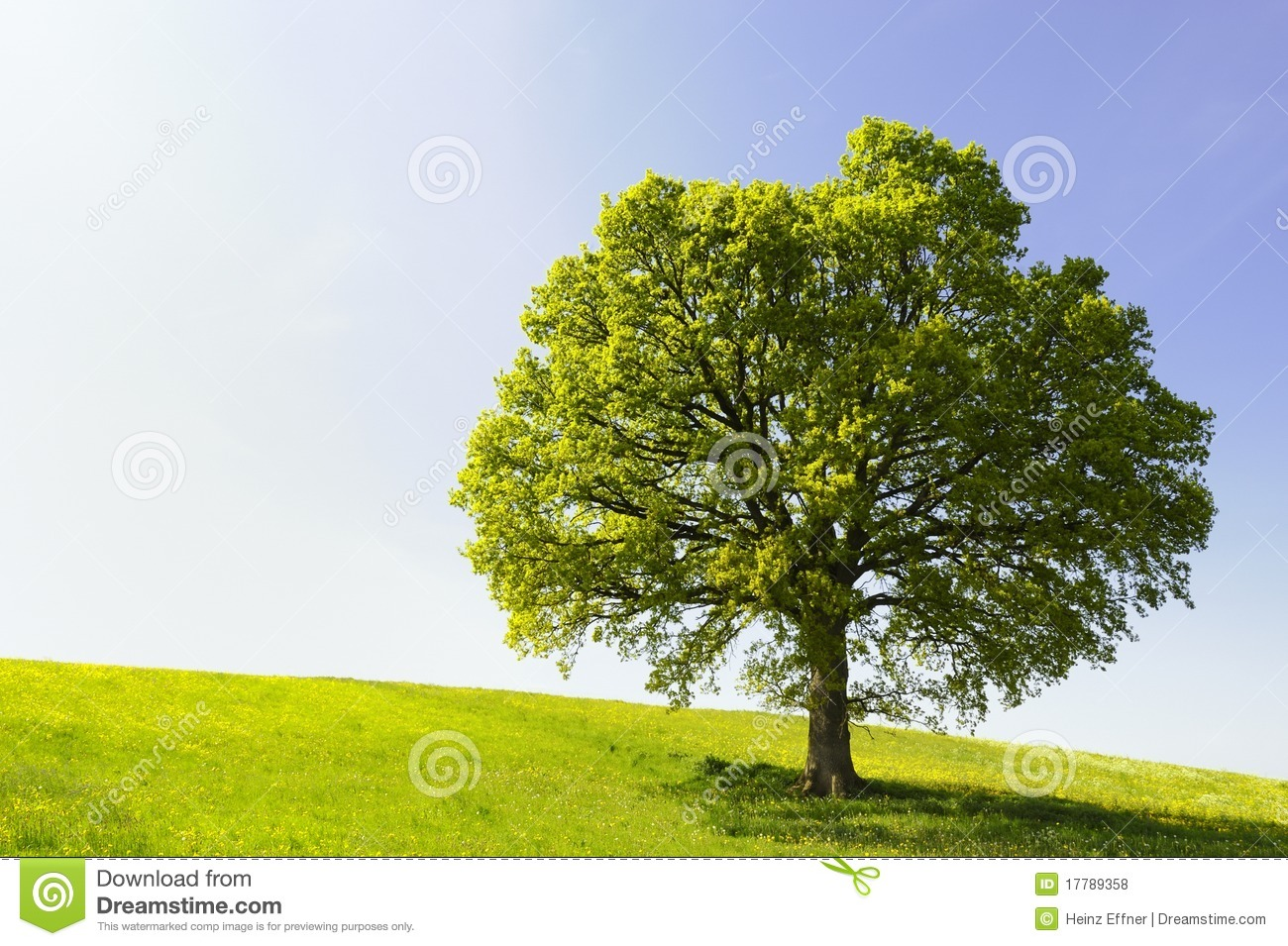 Single tree on hill royalty free stock photos image 17789358